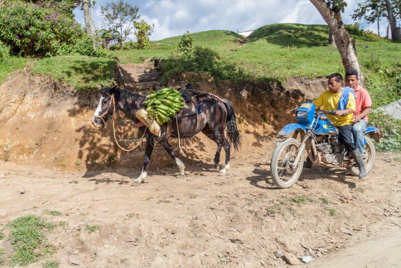 SAN JOSE DE ISNOS, COLOMBIA - SEPTEMBER 14, 2015: Män rider mopeden, åsna bär bananen royaltyfria foton