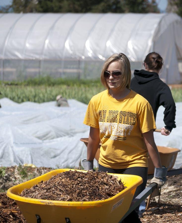 San Jose State Student Volunteer Editorial Image