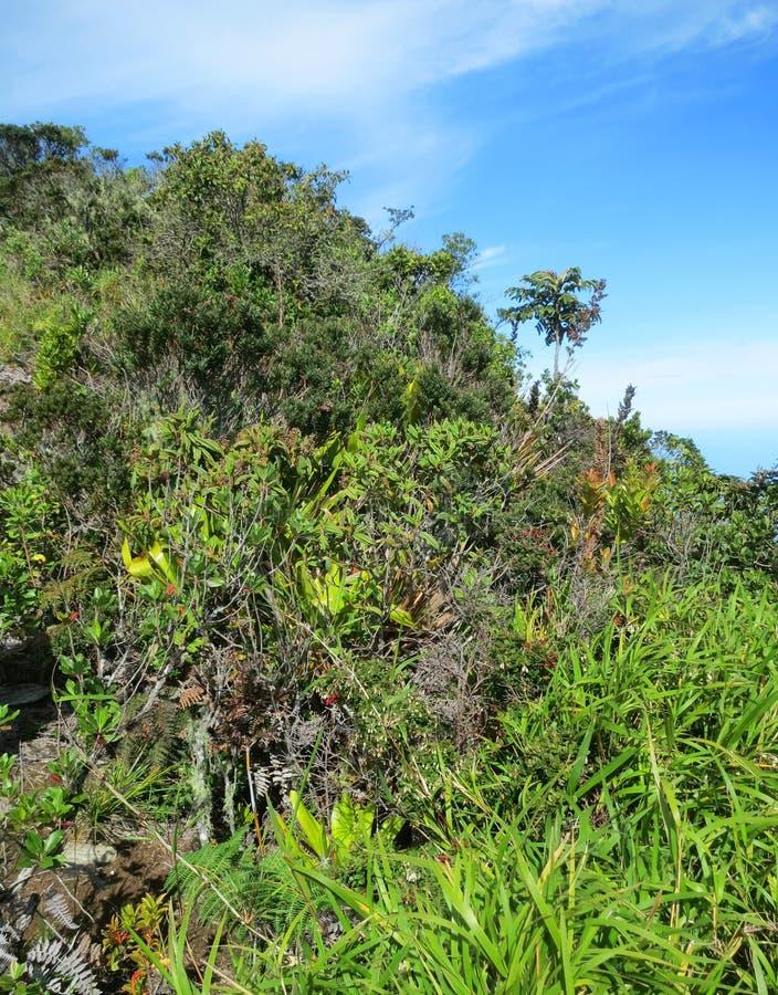 San Lorenzo ridge; El Dorado Bird reserve, Sierra Nevada, Santa. Marta Mountains, Colombia stock photo