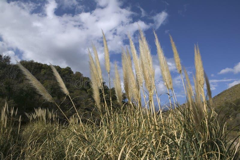San Luis стоковое фото
