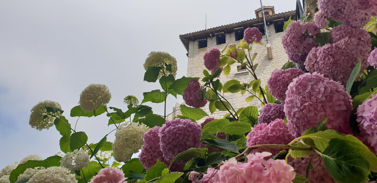 San Marino. Flowers in the old centre of San Marino stock photo