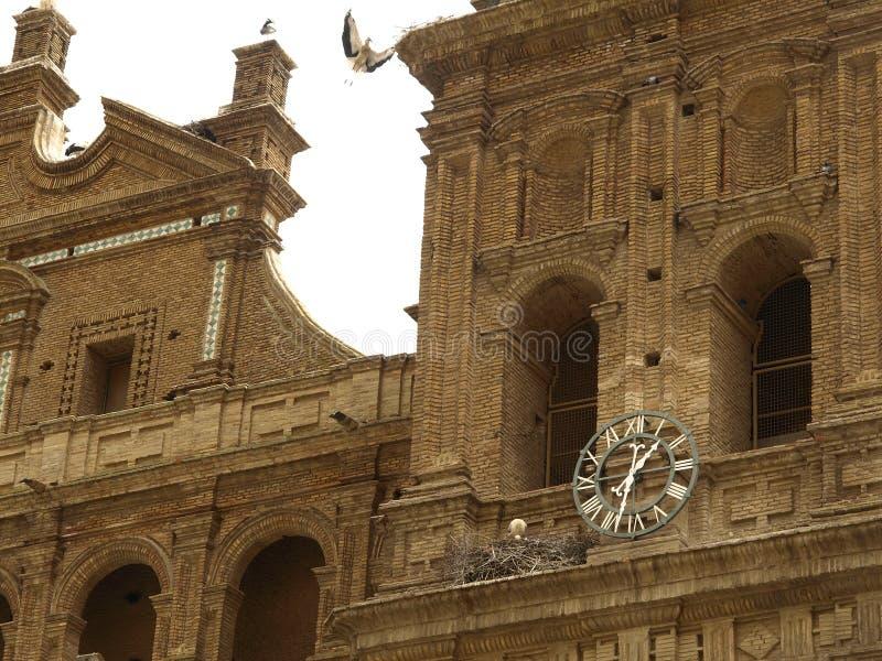 Download San Miguel storks stock image. Image of close, nature - 24565367