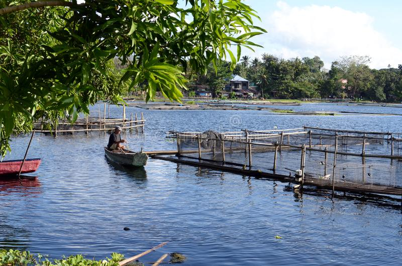 Lake boatman tending fish cage net being his means of livelihood royalty free stock images