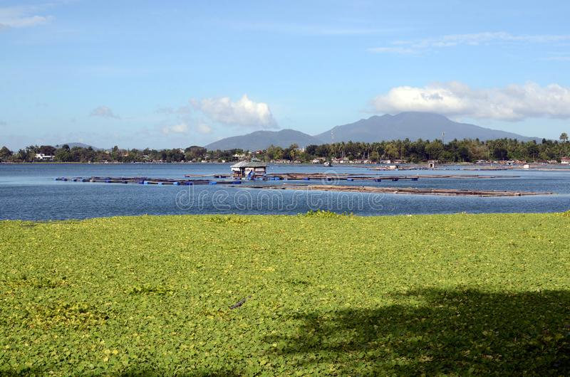 Lake fish cage full of water lilies environmental issue confronting fish farming. San Pablo City, Laguna, Philippines - January 21, 2017: Lake fish cage full of royalty free stock image