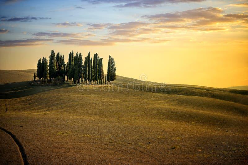 San Quirico D ` Orcia, berömd grupp av cypressträd i sommarsolnedgångljus italy tuscany arkivfoto
