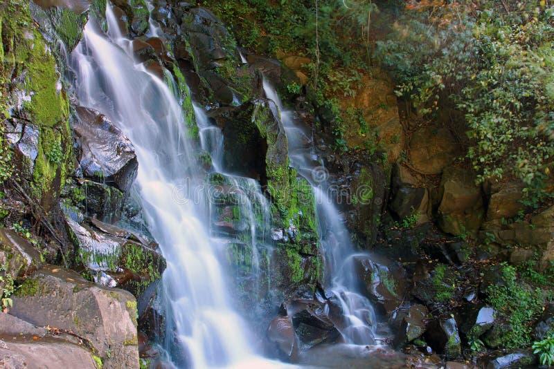 San Ramon Waterfall, Boquete, Chiriqui, Panamá fotografia de stock royalty free