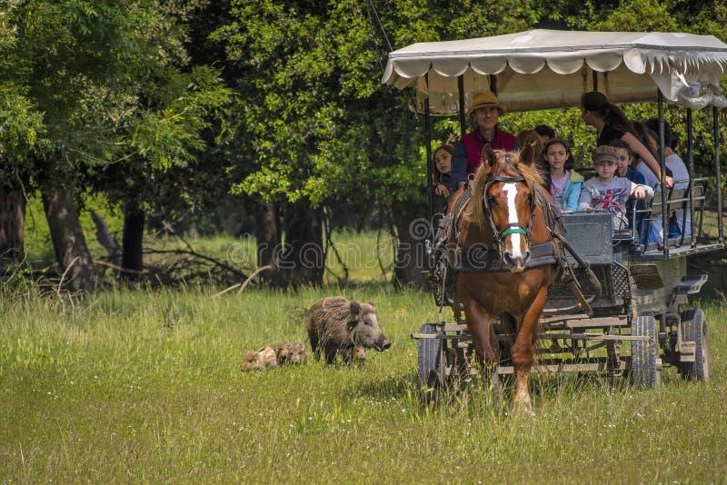 SAN ROSSORE公园,米利亚里诺,意大利– 2019年5月25日:一辆用马拉的车的游人由家庭小组加入  库存照片