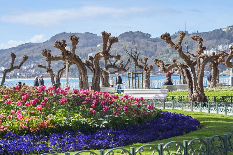 San Sebastián, País Vasco/Spain; 03-18-2019. Spring flowers of red and purple color with the sea in the background stock photography