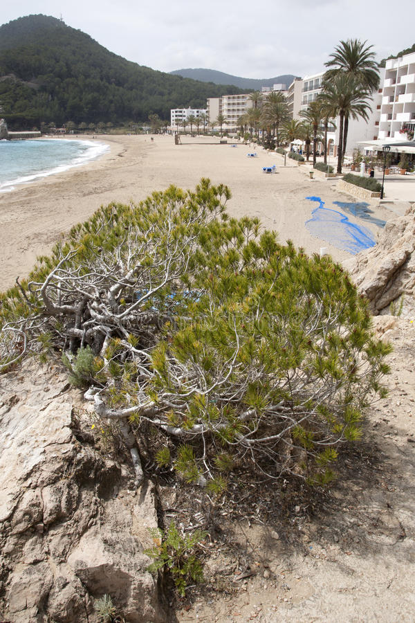 San Vicente Beach, Ibiza, Balearic Island fotografering för bildbyråer