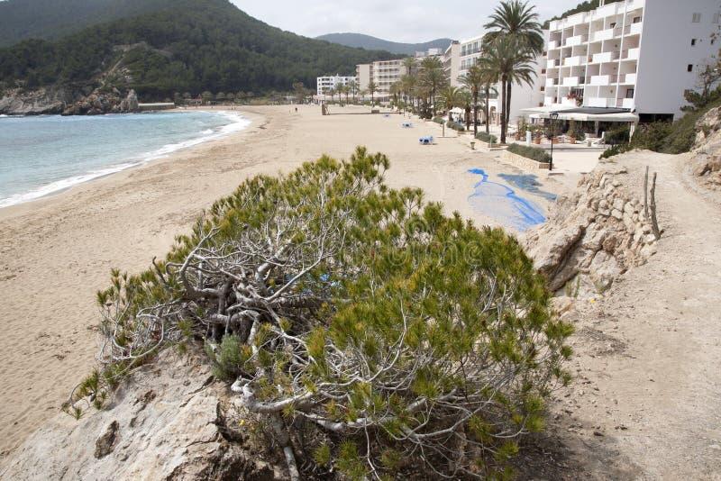 San Vicente Beach, Ibiza, Balearic Island arkivfoto