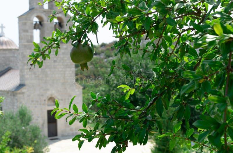 Sanctified fruit. Green garnet on the background of the Church. Female monastery Beska. Bogoroditsa.   Murichi. Montenegro. Murici stock photos