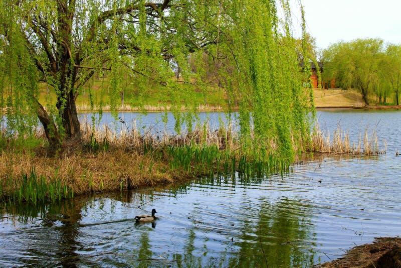 Sanctuaire de canard photo libre de droits