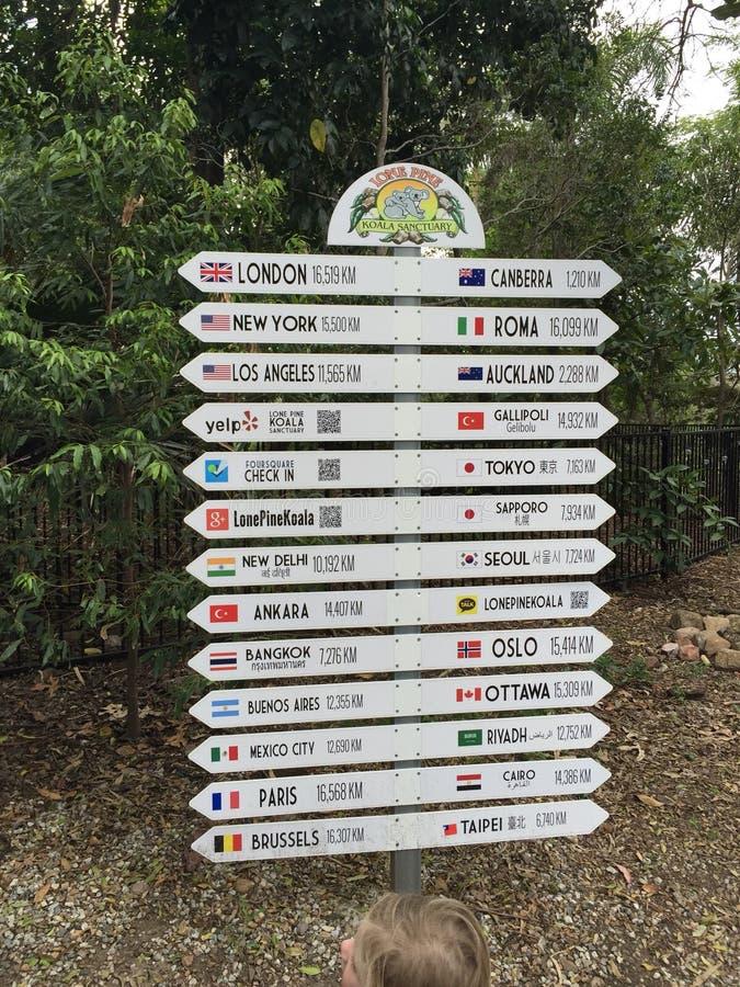 Sanctuaire solitaire Brisbane de koala de pin images libres de droits