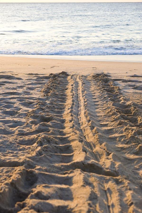 sand śladu żółwia zdjęcie stock