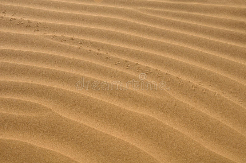 Download Sand Royalty Free Stock Photos - Image: 24218258