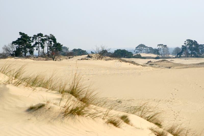 Sand-Antrieb, Bäume und Gras lizenzfreies stockfoto