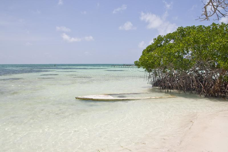 Sand beach with mangrove forest, Caye Caulker stock photography