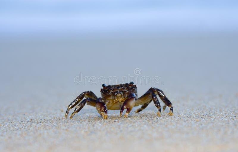 Sand-Befestigungsklammer stockfoto