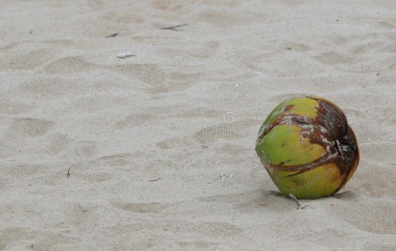 Sand and Coconut royalty free stock photo