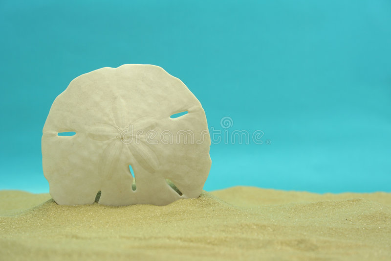 Sand Dollar. On Sand With Blue Background