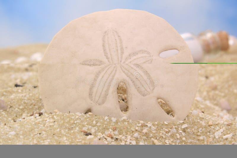 Download Sand Dollar stock photo. Image of sanddollar, tourism - 3976638
