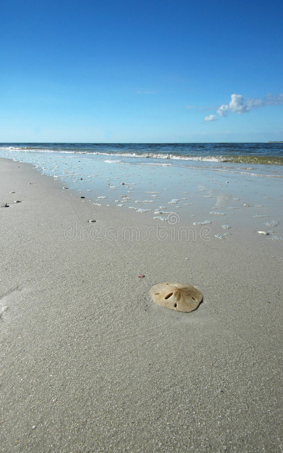 Download Sand dollar on beach stock image. Image of waves, seashore - 360571