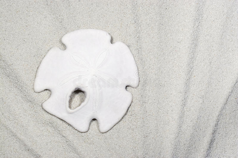 Download Sand Dollar on Sand stock image. Image of marilyngould - 18745269