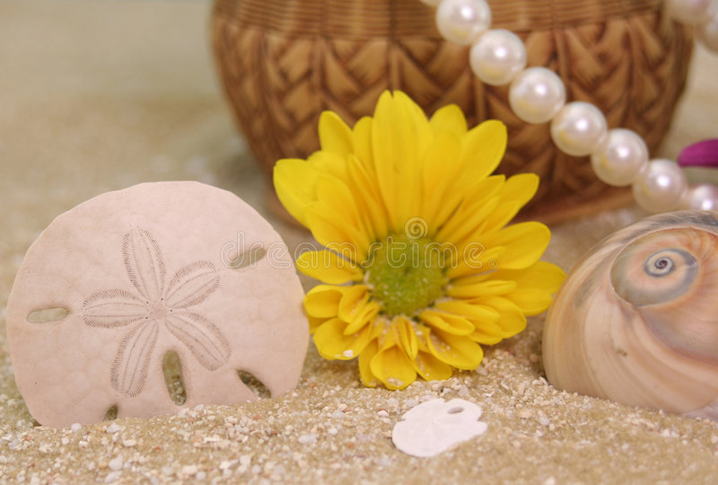 Sand Dollar and Sea Shells royalty free stock photography