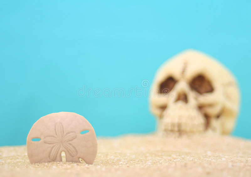 Sand Dollar With Skull royalty free stock image