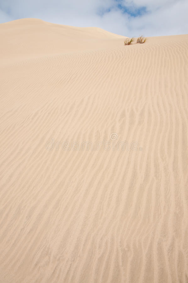 Download Sand dune 2 stock photo. Image of sand, grain, desert - 12528942