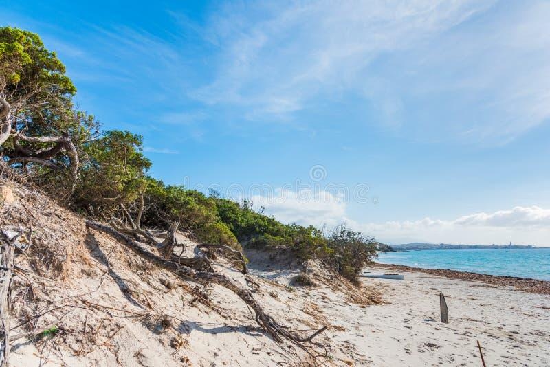 Sand dune in Alghero shore. Sardinia stock photography