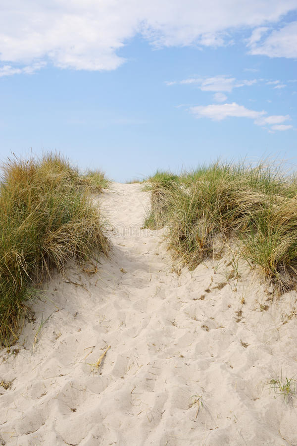 Free Sand Dune At Baltic Seaside Stock Photography - 72609222