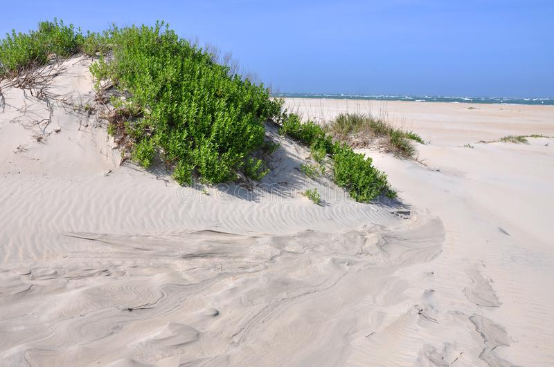 Sand Dune in Cape Hatteras, North Carolina stock photos