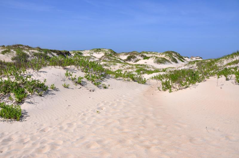 Sand Dune in Cape Hatteras, North Carolina stock image