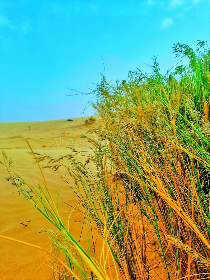 Sand dune in desert of Algeria royalty free stock photos