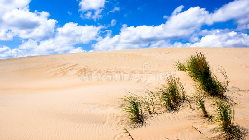 Sand dune desert with green reeds and grasses in the Outer Banks of North Carolina royalty free stock image