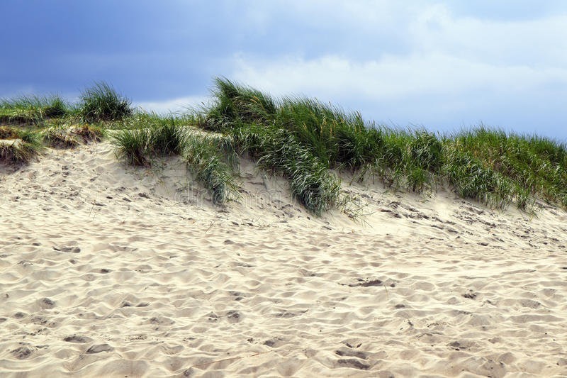 Sand dune with grass on a windy summer day against a blue sky royalty free stock photo