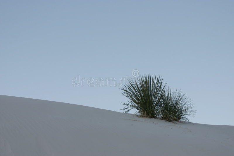 Sand dune with plant