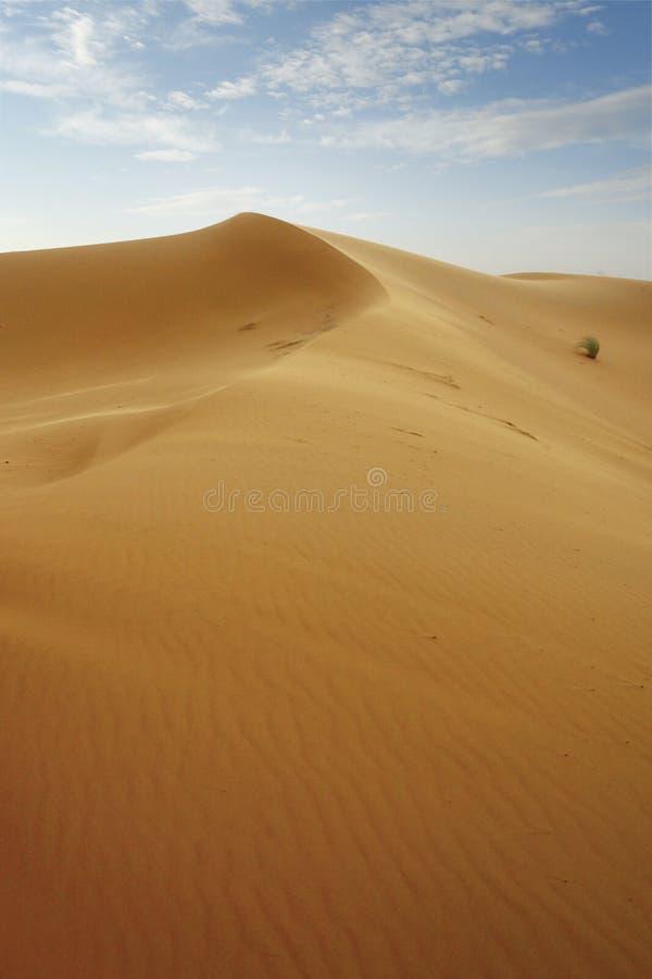 Sand dune in the sahara desert. Near merzouga -morocco royalty free stock images