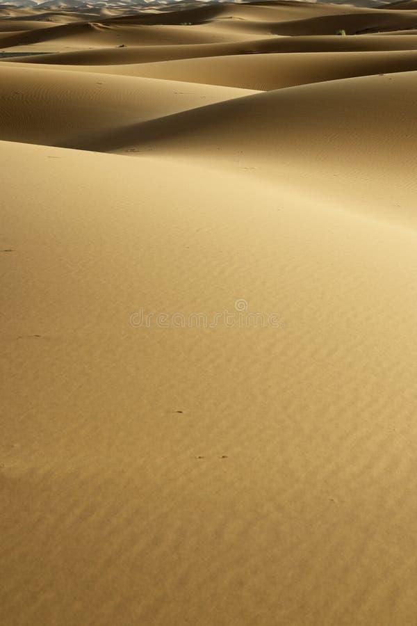 Sand dune in the sahara desert. Near merzouga -morocco stock images
