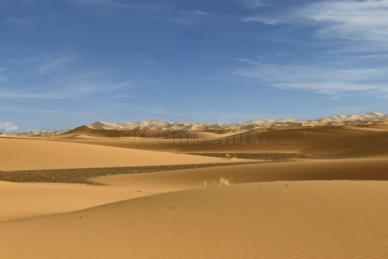 Sand dune in the sahara desert. Near merzouga -morocco royalty free stock image