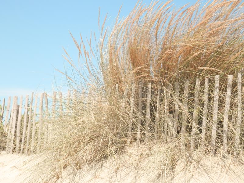 Sand dune. Small sand dune near a beach in France royalty free stock images