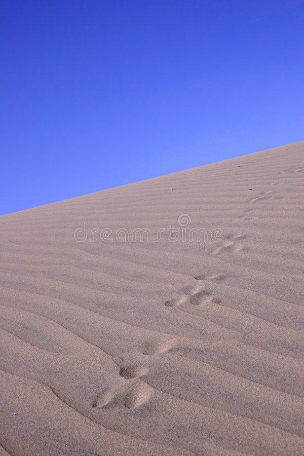 Download Sand Dune With Tracks stock image. Image of sand, footprints - 129083