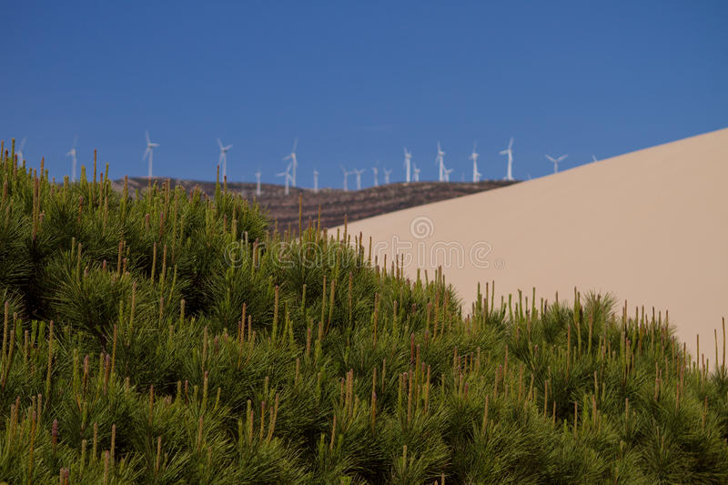 Sand dune and trees stock photos