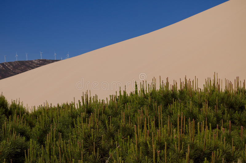 Sand dune and trees royalty free stock photos