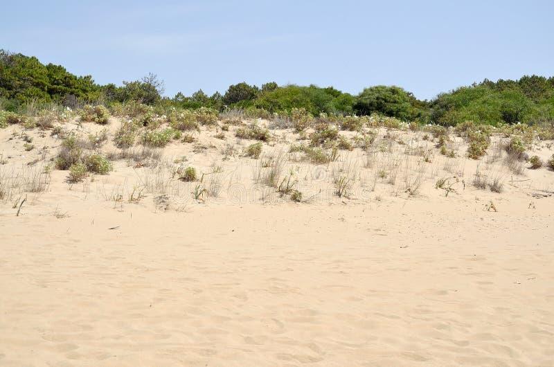 Sand dune vegetation stock photo