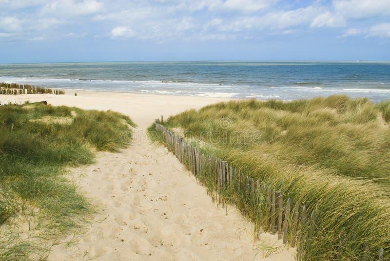 Sand dunes. Along the Belgian coast royalty free stock photography