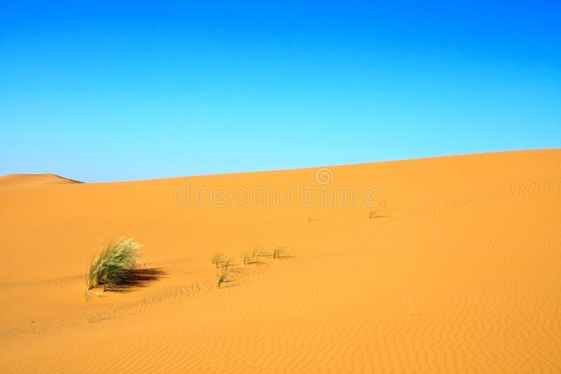 Download Sand Dunes Royalty Free Stock Image - Image: 11358126