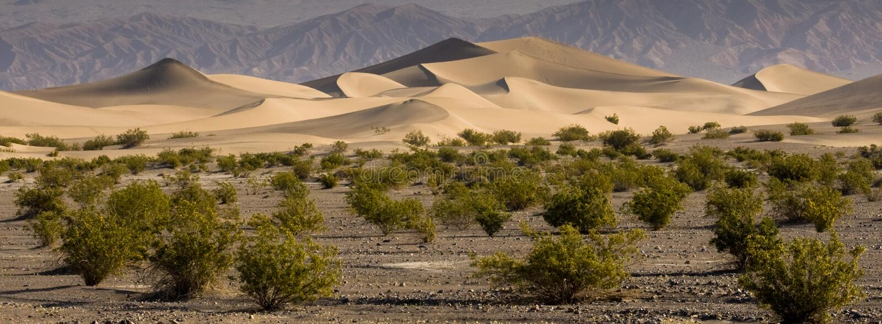Download Sand Dunes stock image. Image of dunes, mesquite, panoramic - 13834445