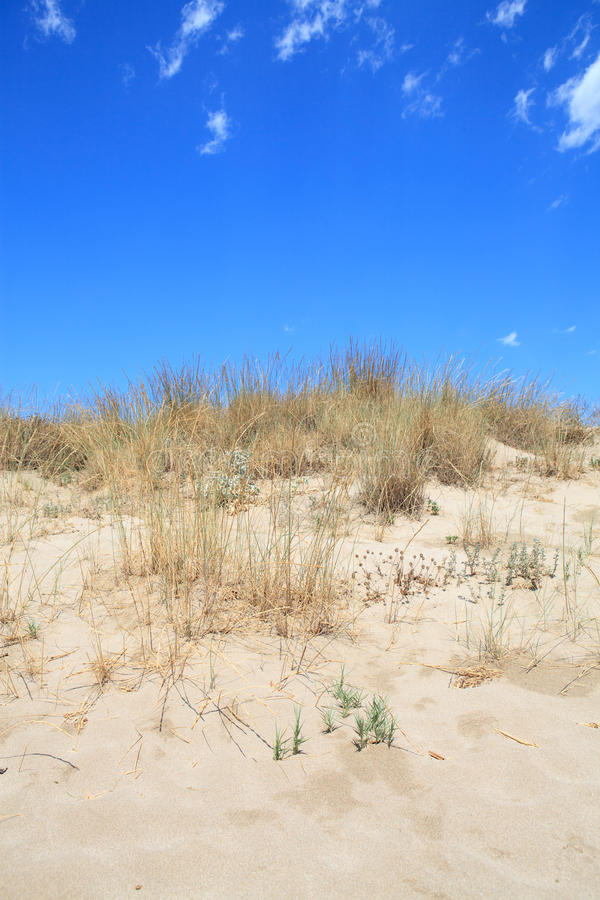 Download Sand dunes stock photo. Image of sand, nature, coast - 16227976